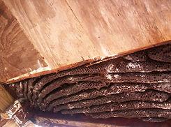 Bee hive in Deer stand in TX.jpg