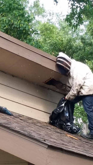 Residential Soffit Bee Removal