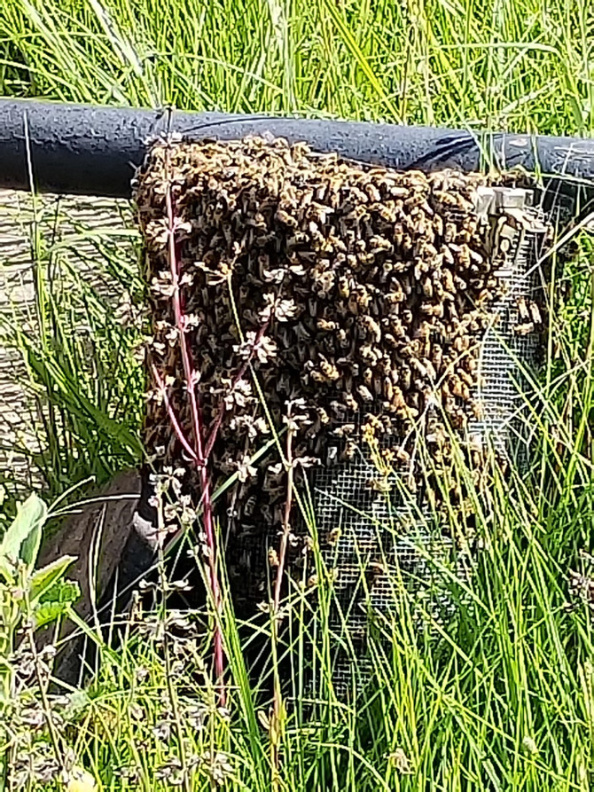 Affordable Bee Removal Texas