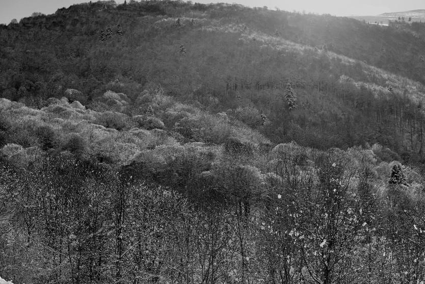 Car j'appartiens aux forêts et à la solitude