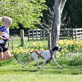 Susan & Jack Dog.jpg