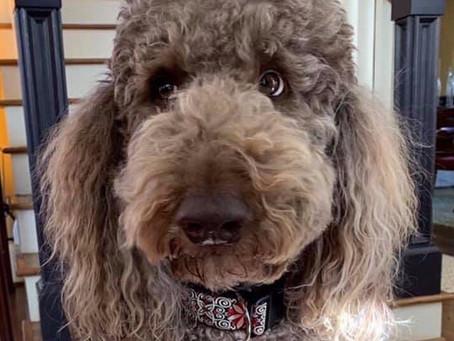 Dog Shampoo -- Ingredients Matter