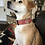 "Thumbnail: ""Tula Pink"" 