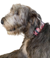 wide martingale dog collar for wolfhound