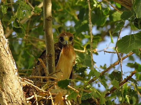 Conservación y Defensa de la Biodiversidad ACOBIJA