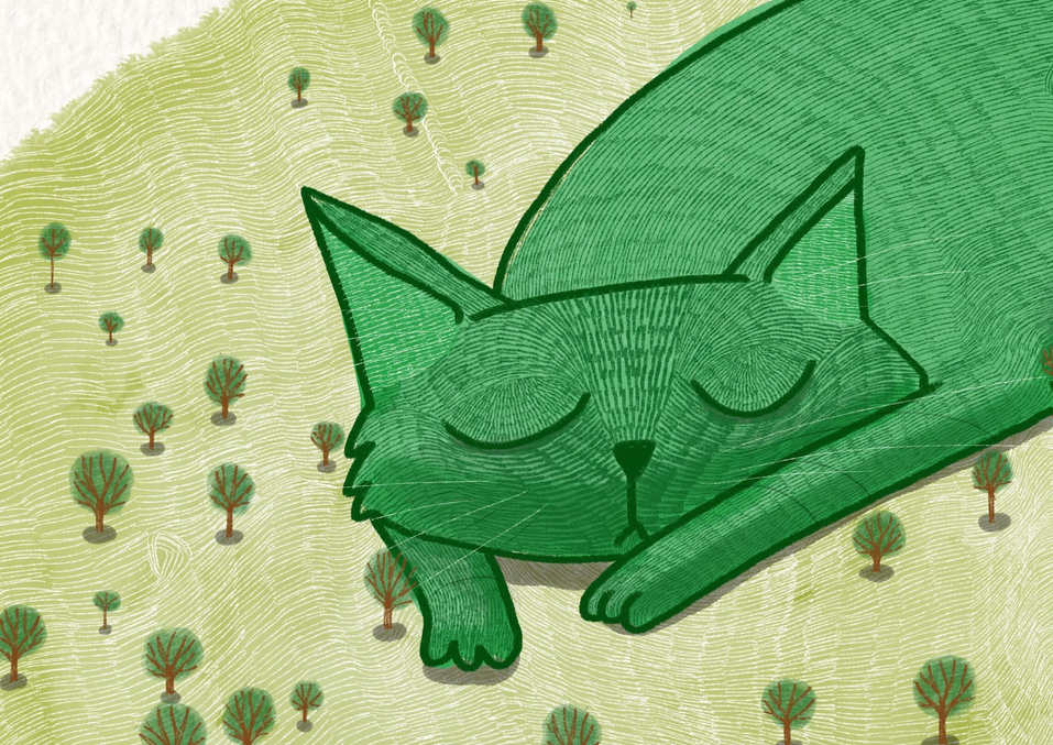 The Giant Cat Is Sleeping Close Up