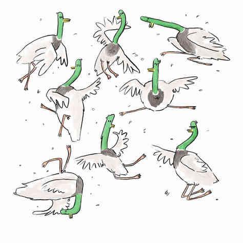 Only the Daringest Ducks Do Disco