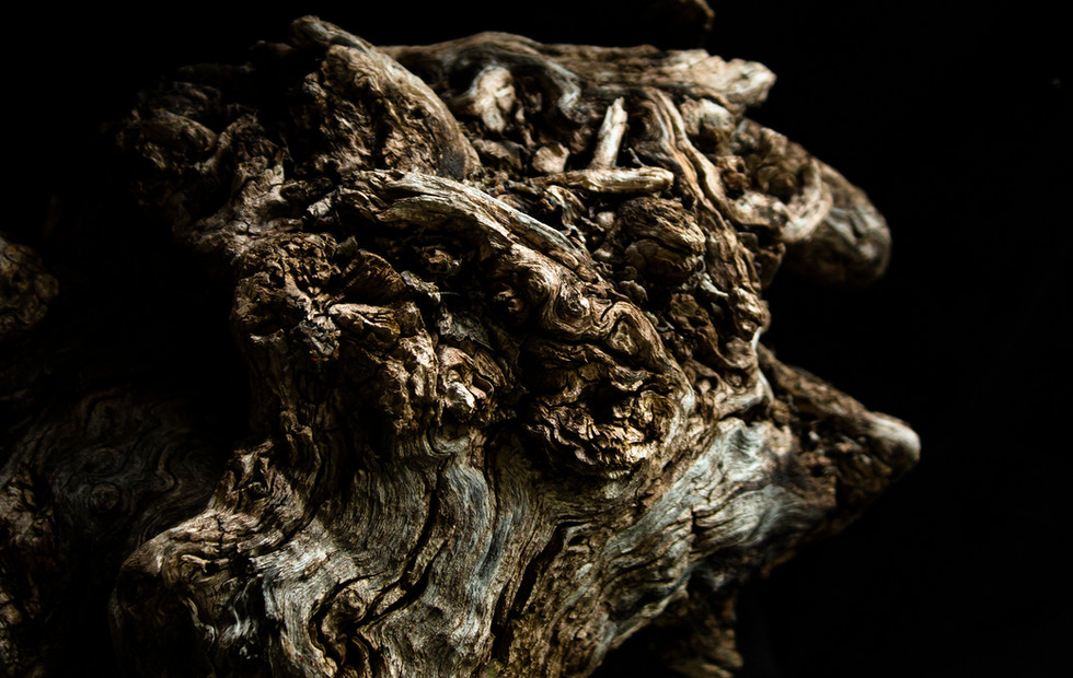 Mythological Root 2