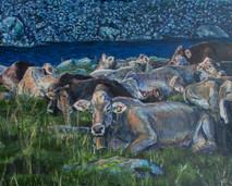 Mucche al Sambuco
