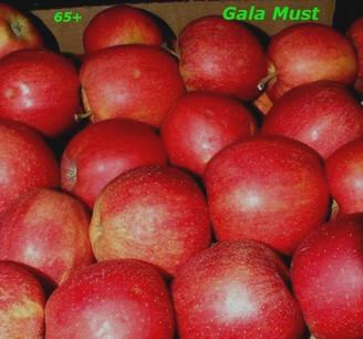 Gala MUST