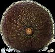 Avokado 1 (1).png