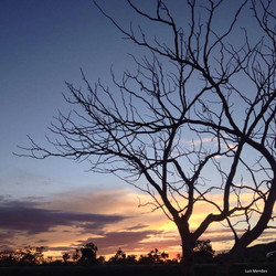 Árvore cerrado Alto Paraíso