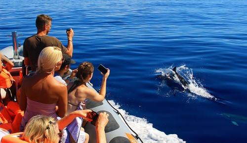 rota dos cetaceos.jpg