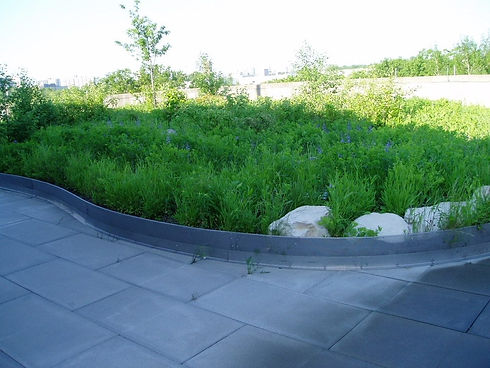 Garden-Roof-2-1024x768.jpg