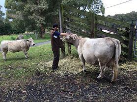 Silver Gully Farm Life