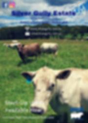 Buy a Start-up Herd