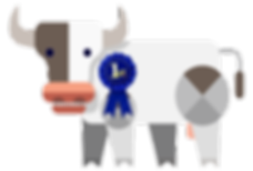 Award winning cattle