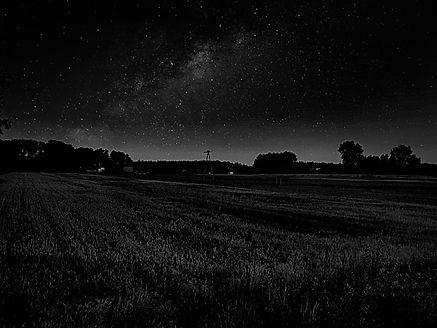 wheat at night1.jpg