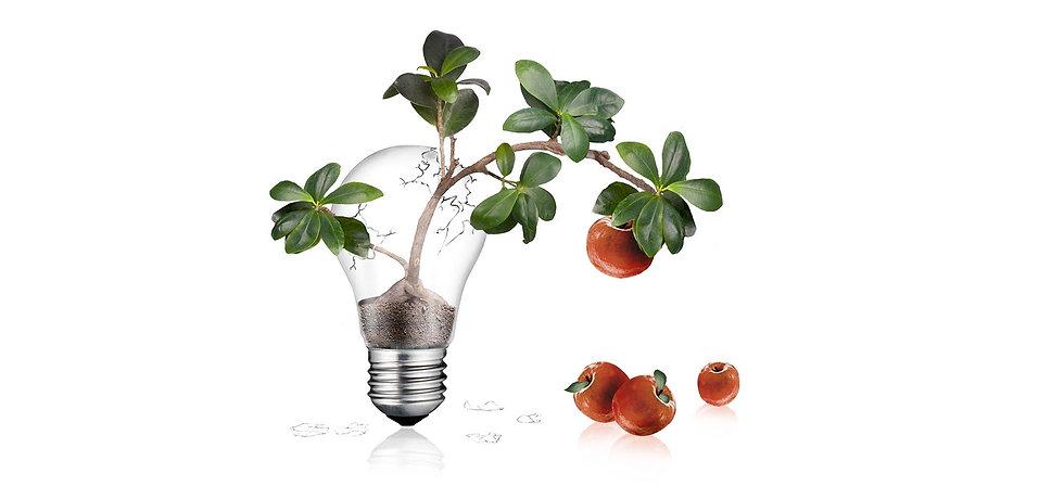 Ideen-die-Früchte-tragen_Blick Kick.jpg