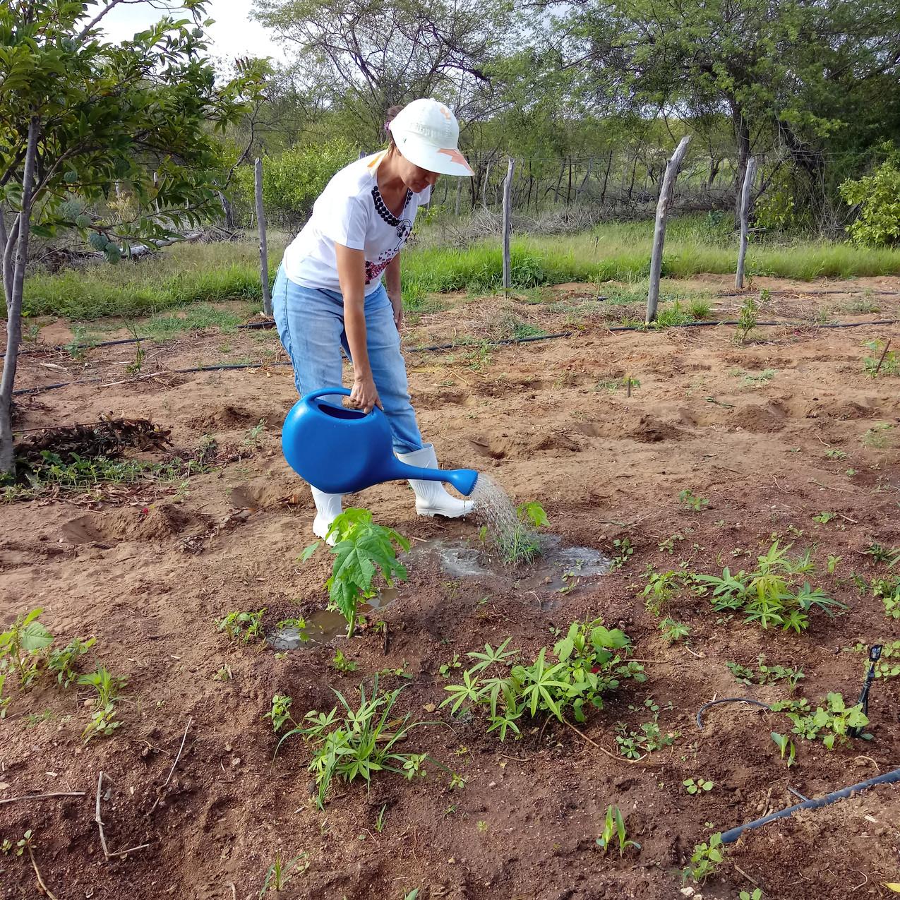 Irrigação, Mandala