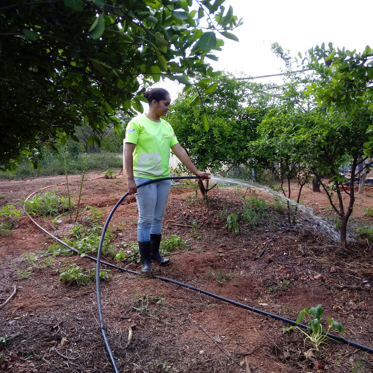 Irrigação Acerolas, Horta
