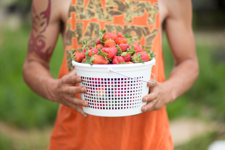Hood Strawberry Farm