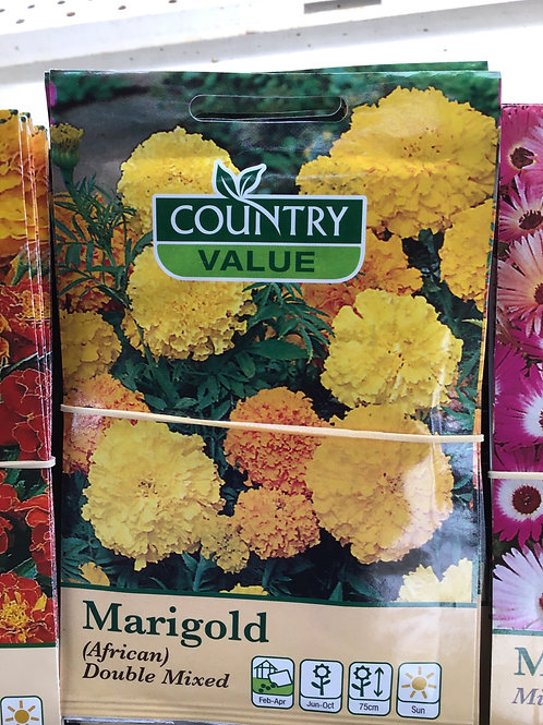 Marigold African