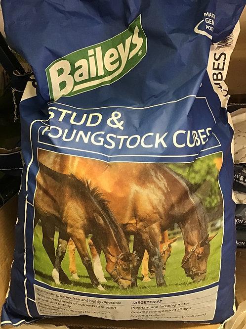 Baileys Stud & Youngstock Cubes