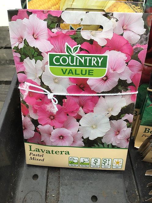 Lavatera pastel mixed
