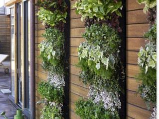 Living Wall Love