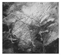 Genus Equisetum I