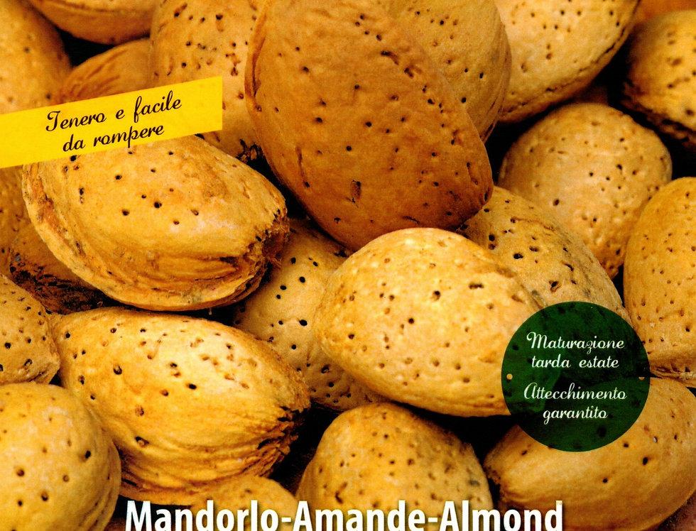 MANDORLO
