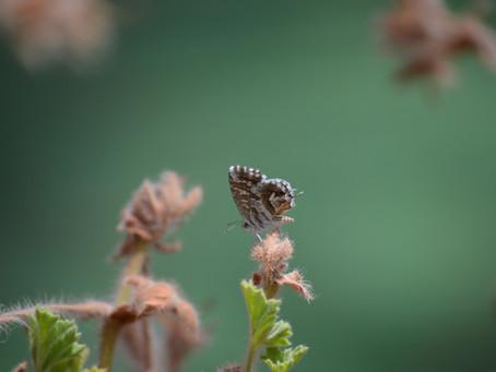 Bir Kelebeğin Kanat Çırpışı Gerçekten Kasırgaya Yol Açar Mı?