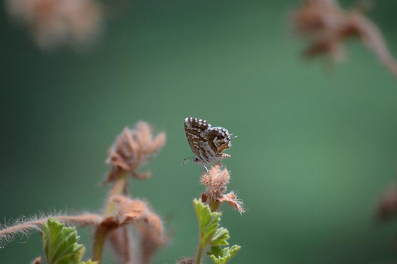 Farfalla sul ramo