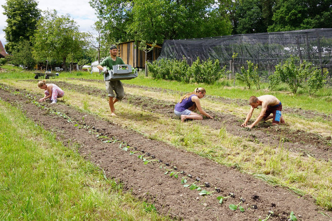 Bio-Obstplantage in Bubikon «Brachland»