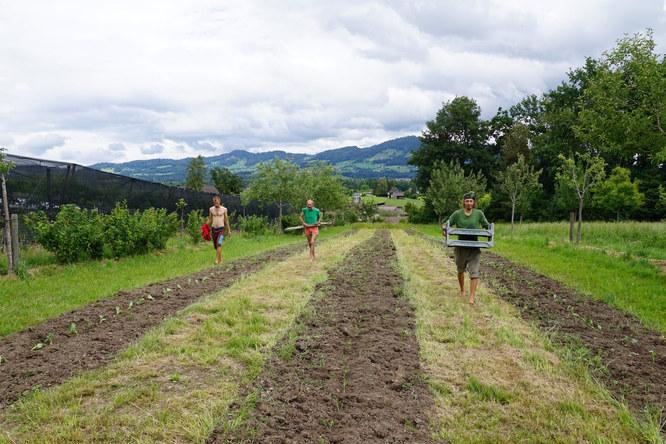 Demeter Bauernhof «Brachland» : Biologisch-dynamischer Gemüseanbau