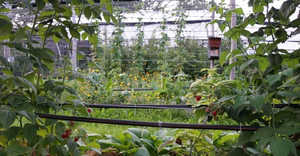 Bio-Obstplantage des Demeter-Hofs «Brachland»