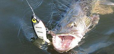 снасти для рыбалки 2.jpg