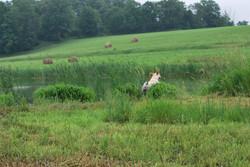 2014 hunt test 614