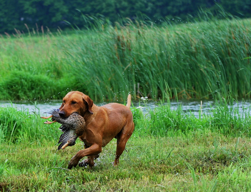2014 hunt test 459