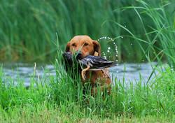 2014 hunt test 440