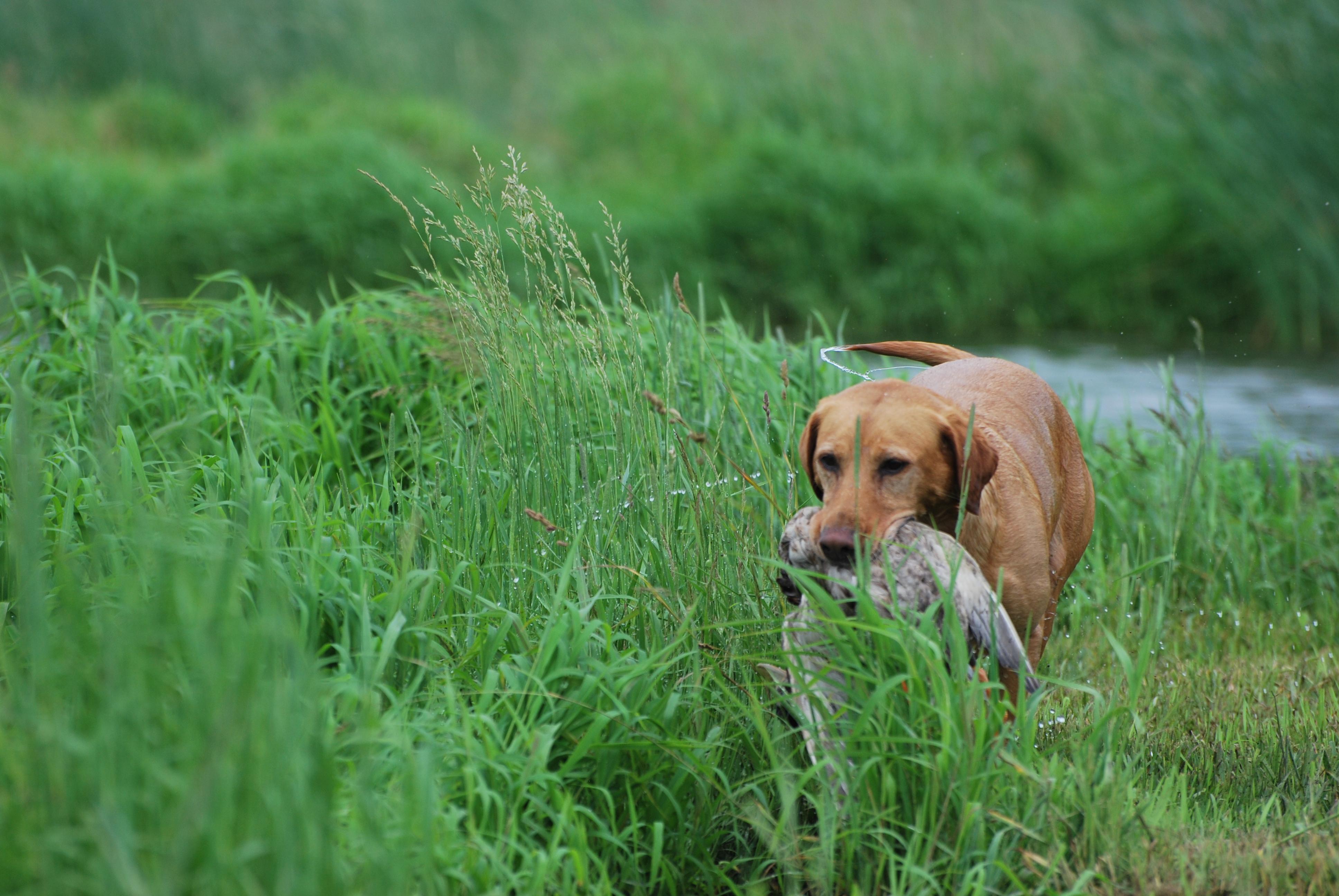 2014 hunt test 413