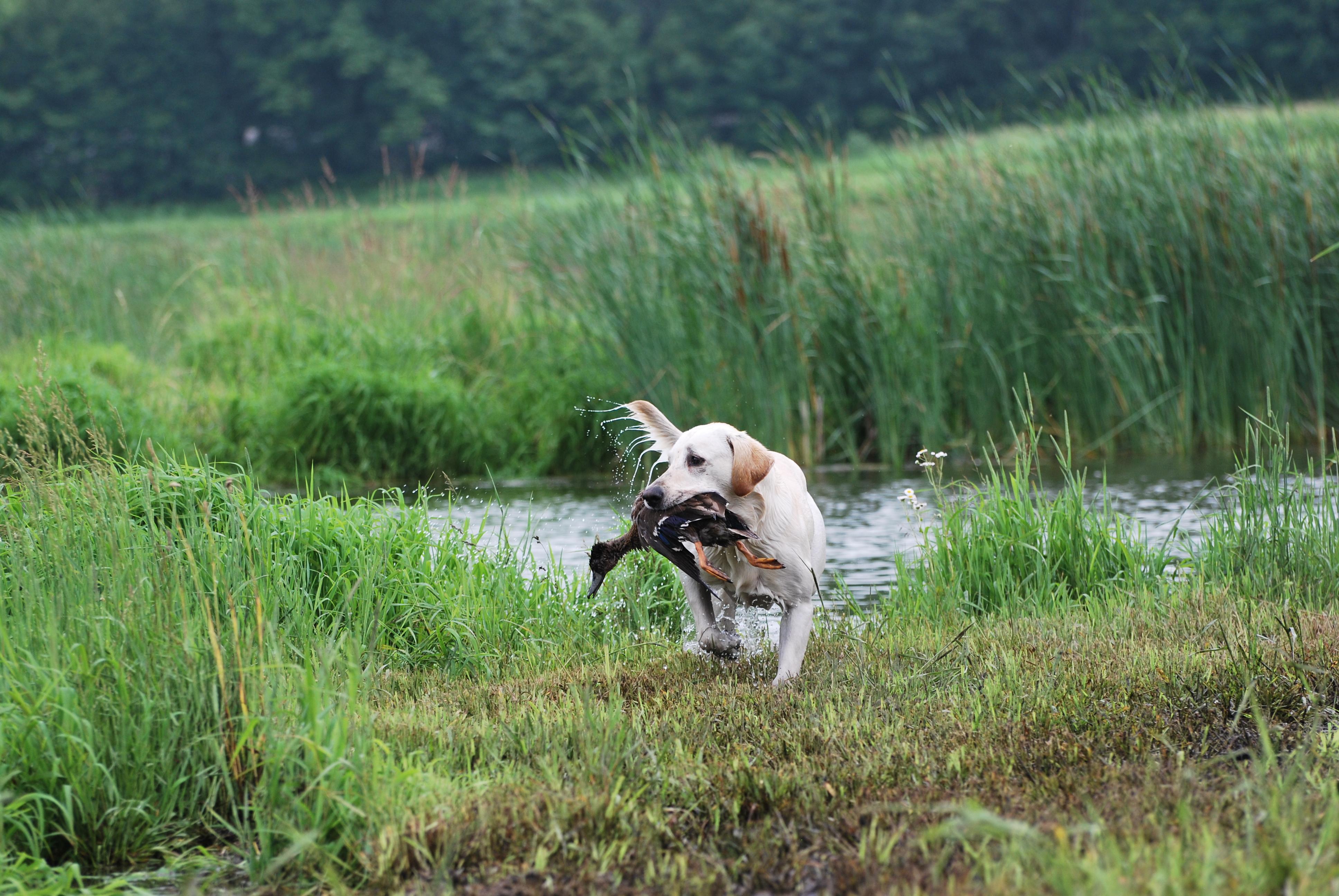 2014 hunt test 649