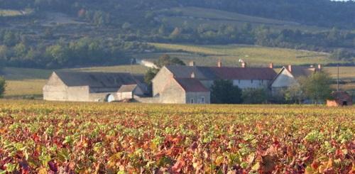 vignes-abbaye-morgeot (1)