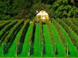 vineyard-464180