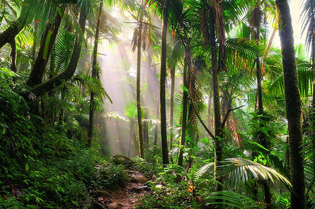el-yunque-rainforest-beautiful-path.jpg