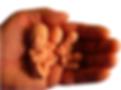 Hand holding baby fetal models