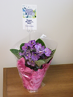 Mother's Day flowers African violet