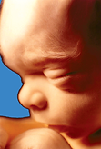 Unborn child at 20 weeks