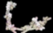 kisspng-flower-deviantart-rendering-yell